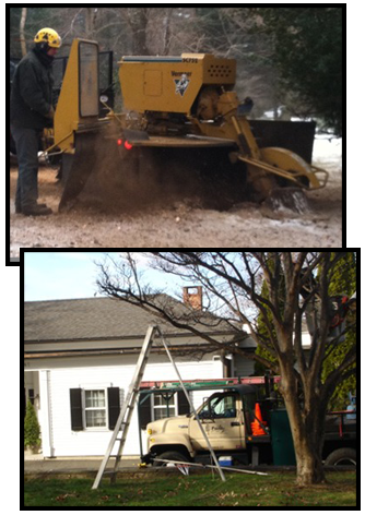 Stump Grinding and Tree Pruning